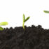 Sequence of a plant growing in dirt, profiled against a white background.